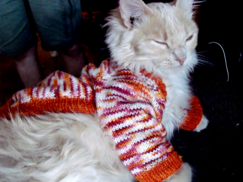 catinababysweater